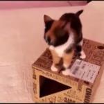 大爆笑!!猫の笑えるシーンを集めてみました(^○^)