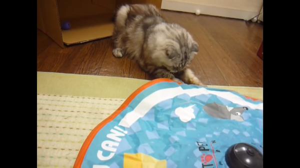 捕まえられるものなら捕まえてみな!キャッチ・ミー・イフ・ユー・キャンに夢中な猫たち(^○^)