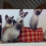 やっぱり猫はおもしろい!猫のおもしろい瞬間を捉えた映像集(^○^)