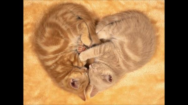 ニャンだふる!猫の面白・不思議な決定的瞬間が大集合♪
