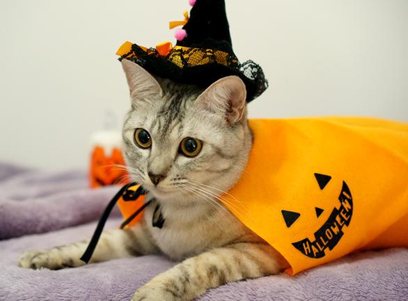 【もうすぐハロウィン】準備はお早めに!真似してみたい猫ちゃんの仮装画像集♪