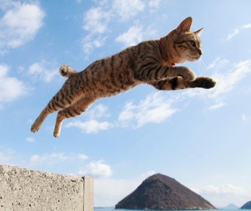【前世はアクションスター?】アクロバティックな猫ちゃんに驚きを隠せない♪