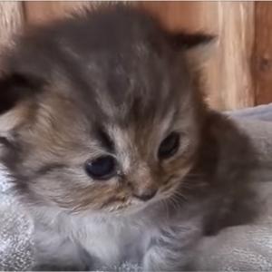 面白かわいい猫たちがいっぱい♪猫のおもしろ動画集(^○^)