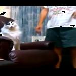 お父さんに絶対席を譲らない猫「あたしの椅子よ!」