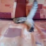 なんとかしてソファの隙間に隠れたい子猫のみせるアクロバット!!