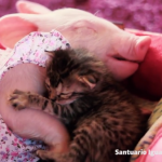 ワンピースを着た子豚ちゃんと仲良しの子猫ちゃん♡最後は二匹でスヤスヤ・・・Zzz