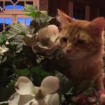 超エレガンスな猫ちゃんの寝床は・・・なんとお花でいっぱいのかごの中!お花にまみれた姿がお美しい♡