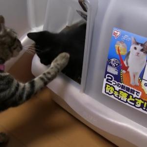 猫トイレから出られなくなっちゃった!子猫を助ける母猫。トイレのドアの開け方がわからない生まれたての子猫(*´ω`*)