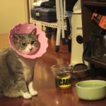 エリザベスカラーを付けた猫を不審な目で眺める猫。この話題に触れていいのか悪いのか分からずタジタジ・・・笑