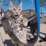 公園のブランコで遊ぶ猫♡気持ちよさそうにゆら~ゆら~♪