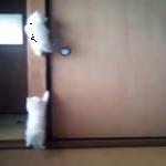 早朝に子猫ちゃんたちは我が家でなにしてる??柱をよじ登る子猫ちゃんたち!