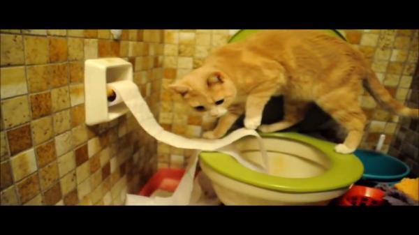 ほぼ完璧・・・に様式トイレで用を済ませる猫。事の後は手もきちんと洗います。