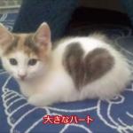 えっ、これってホンモノ!?偶然の芸術。おもしろい・すごい柄の猫たちにビックリ!