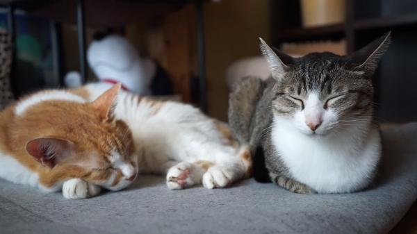 う~ん、ニャンだか気にニャる(´・ω・`)他の猫との距離が近過ぎでなかなか眠れない猫
