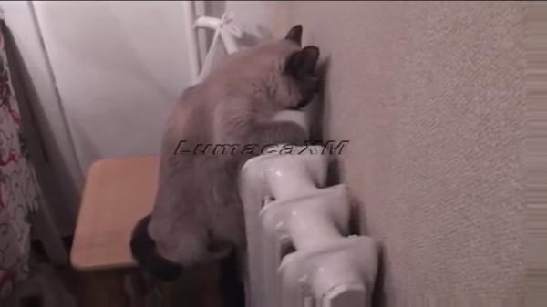 ブルブル・・・寒がりすぎて暖房器具にピッタリくっついたまま離れない猫