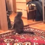 「あたし・・・猫なの?」鏡をみて自分を確認する猫ちゃん。「超かわいいじゃないの・・・」