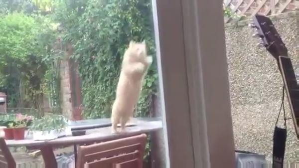 驚きのジャンプ力で小窓から家の中に入る猫( ゚Д゚)