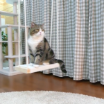 ブランコに乗って遊びたい猫ちゃん!('ω')何度もトライする姿がめちゃくちゃかわいい!♡