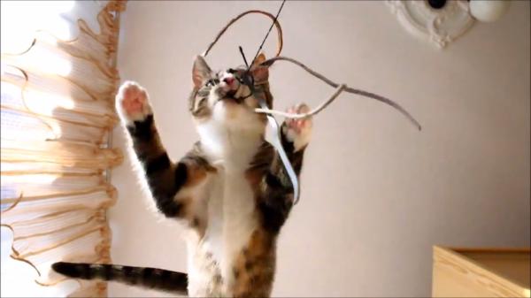 超興奮状態の子猫ちゃん、家の中で大暴走!暴れ放題!!(*ノωノ)