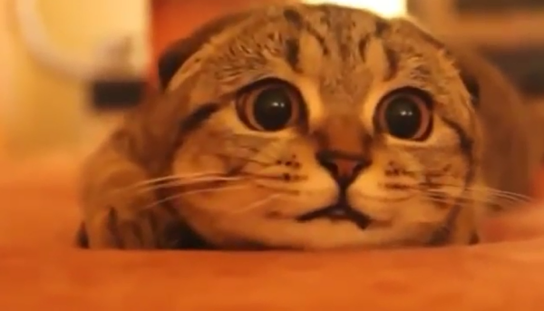 ホラー映画を見ている猫ちゃん…怖がりっぷりが超カワイイ♡