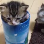 「助けてミャ…」お菓子の筒にハマった子猫ちゃん…家族の愛で無事救出♡