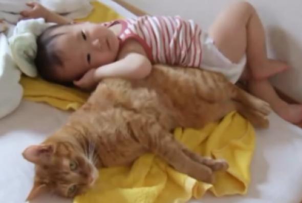 何をされても怒らない♡弟分の赤ちゃんとお兄ちゃん猫の可愛らしい兄弟愛♡