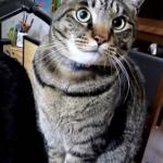 一緒にいるだけで幸せだよ…♡年上のメス猫に恋するオス猫の悲しい恋の結末に涙…