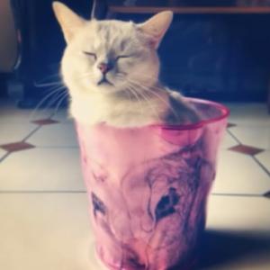 猫は液体だった!?液状化が止まらない、溶ける猫のオモシロ写真集♪
