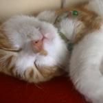 いい夢見てるかニャ♡寝言を言いながらお口をパクパクする猫がカワイイ♡