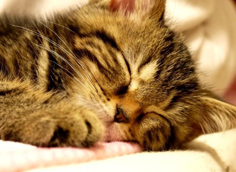 【ネコは寝子なり】スヤスヤ眠るネコの寝顔&寝姿に萌え~♡