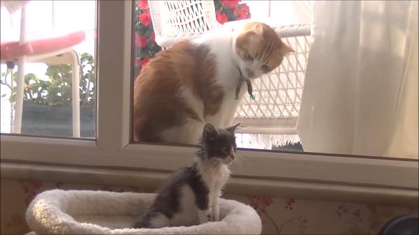 子猫を見守る優しいまなざし♡子猫と話したい猫が可愛い♪