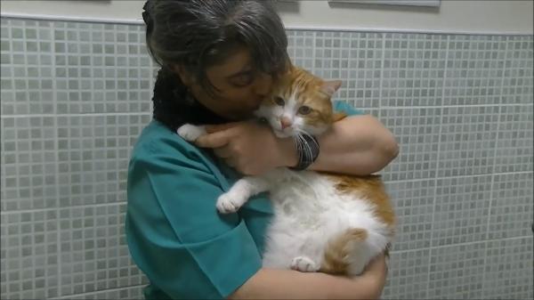 動物病院で抱っこされる猫♪素敵な動物病院でのびのびと診療を受ける( ´∀`)