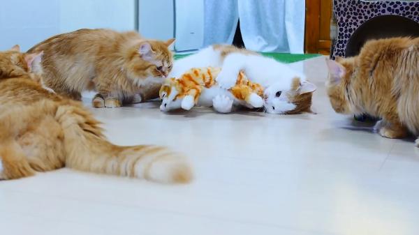大爆笑する猫のぬいぐるみに興味津々!爆笑ぶりが笑いを誘う( ´,_ゝ`)