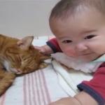 寝ようとしているところを赤ちゃんに邪魔される猫(´・ωゞ)どっちも可愛い♡