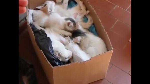 ご飯の時間だニャン♪箱の中で寝ていた子猫たちが一斉に動き出す!!