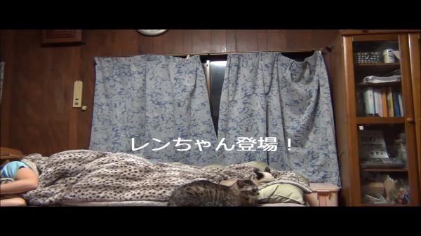 ギモン解決!?人が寝た後猫は何をしているのか、その様子を撮ってみた!