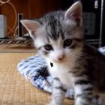 いろんな猫が大集合!世界の可愛い猫たちの可愛い映像集♡