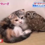 猫とふくろうの異色コンビが可愛い♪なんだか表情も似ている?