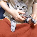 ぱっちんぱっちん♪爪を切ってもらう間の猫の様子