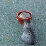 ツボが大好き♪ツボを取り合う猫たち。丸まって入る姿が可愛すぎ(*^^*)