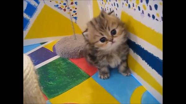キュン死注意!!死ぬほど可愛い子猫たちの映像集(*´艸`*)