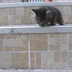 冒険心旺盛な子猫(*´艸`*)親が大変なのは人間も猫も一緒^^;