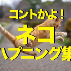 まるでコント!猫ちゃんのおバカ可愛いハプニング動画集♡