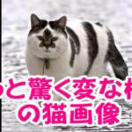 インパクト大!模様が個性的なオモシロ猫ちゃん写真集♪
