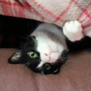 コタツ撤去反対!引っぺがされた布団に絶望するネコたち「悲しい世界ニャ」