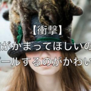 ウザいんだけど可愛い♡ネコのかまって欲しいアピールあれこれ( *´艸`)