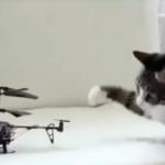 これだからネコはやめられない!ちょっぴりお間抜けなおバカ可愛い動画集♡