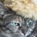 「こんニャはずじゃ…」仲良しなネコとヒナ♪しかし数週間後驚きの展開に…!?