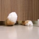 猫の手マニア必見!ドアの隙間が気になるネコ…チラ見え&飛び出る手がカワイイ!