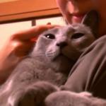 ネコも人間も幸せに♪ネコと暮らせる「ネコ付きシェアハウス」って一体…?
